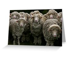 Pack of Sheep Greeting Card