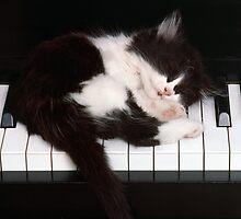 Piano Kitten by Patricia Johnson
