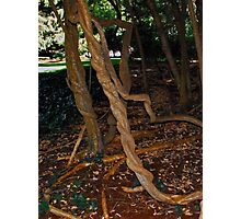 old twisted vines inside Empire Mines Photographic Print
