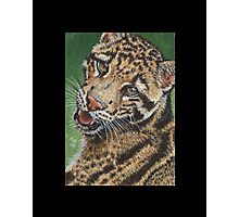 Clouded Leopard #1 Photographic Print