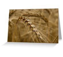 Wheat stalk. Greeting Card
