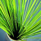 Green Reeds by Bree Ammerman