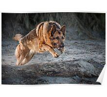 German Shepherd Jump Poster
