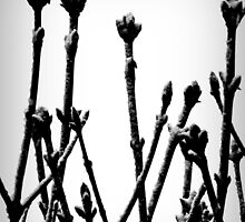 Acorn Tree by mhphotographyuk