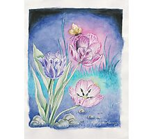 The Vespertine Tulips  Photographic Print