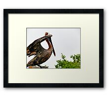 Galapagos Brown Pelican Drying Off Framed Print