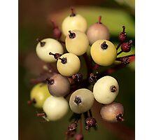 Berry Berry Photographic Print