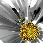 YELLOW BEETLE by Spiritinme