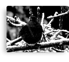 Ms Black Bird Canvas Print