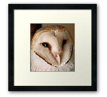 BARN OWL - Tyto alba Framed Print