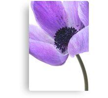 Anemone (mauve) Canvas Print