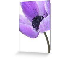Anemone (mauve) Greeting Card