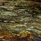 Wood Texture #1 by Trevor Kersley