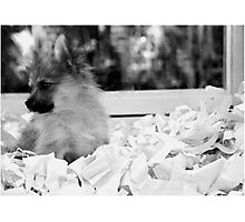 Paper trail Photographic Print