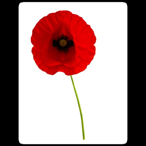 Poppy by b8wsa