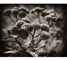 Botanica Photographic Print