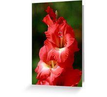 Gladiola Peach Greeting Card
