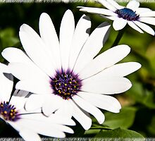 flower by Martin Hudec
