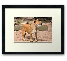 Lady of the King Framed Print