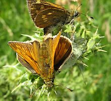 Mating Skippers by shiro
