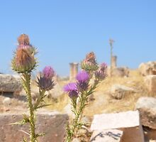Thistles Amidst Ancient Roman Ruins by Malcolm Snook