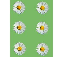 Six white daisies Photographic Print