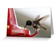 Black-Chinned Hummingbird at Feeder Greeting Card
