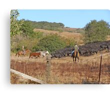 Moving Cattle Canvas Print