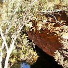 Waterhole - Kings Canyon by Alison Howson