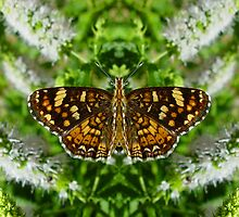 Reflections Of A Pearl Crescent by digitalmidge