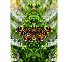 Reflections Of A Pearl Crescent Photographic Print