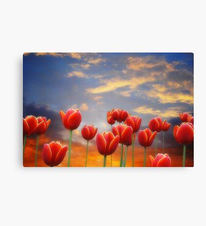 Tulip Sunset Canvas Print