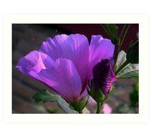 Purple flower and bud Art Print