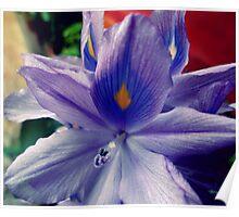 Purple! Poster