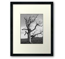 deadwood tree  Framed Print