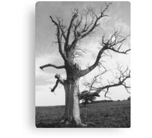 deadwood tree  Canvas Print