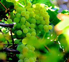 Delicious Grapes by Lorrie Morrison