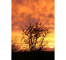 winter sun in Eire Photographic Print