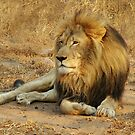 His Royal Highness by Macky