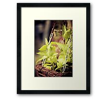 spicy greens Framed Print