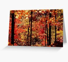 Autumn Splash, Ozark National Forest Near Hawksbill Crag.  Greeting Card