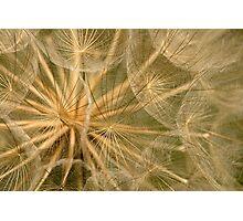 Delicate Seedhead Photographic Print