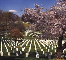 Arlington National Cemetery 3 by Kenshots