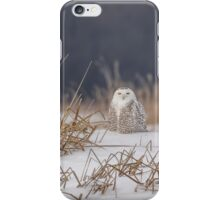 Snowy Owl At The Marsh iPhone Case/Skin