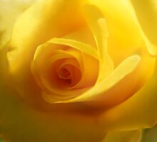 The Softer Side Of Yellow by SueAnne