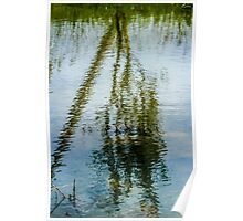 Tree reflected in water  Poster