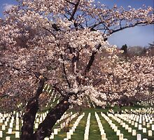 Arlington National Cemetery 5 by Kenshots