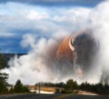 Yellowstone Buffalo by Gene Praag