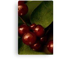 Shining Berries Canvas Print