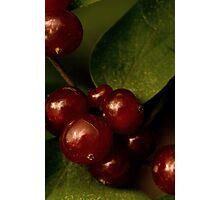 Shining Berries Photographic Print